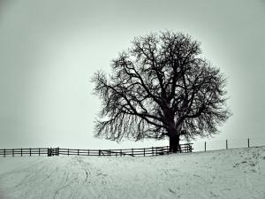 A favourite Tree